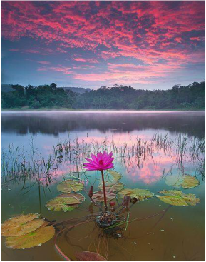 Lotus flower info moms motivating other mothers picture picture picture the lotus flower mightylinksfo